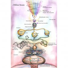 Poster l'Alchimie humaine